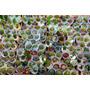 Cactus X10 Unidades - Maceta Plastica 6 - Jardinurbanoshop
