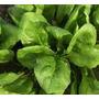 Semillas De Espinaca X2 So Elviveruski Huerta Jardin Siembra