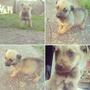 Perritos En Adopción