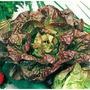 Semilla Lechuga Maravilla 4 Estacions X 5 Gramos Hidroponia