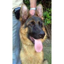 Cachorro Macho 12 Meses - Tamaño Bien Grande