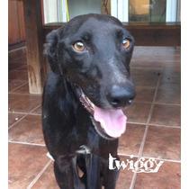 Perrita Cariñosa En Adopción - Twiggy