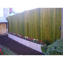 Cerco De Caña Tacuara - Cañas X Unidad - Pergolas Caña Bambu