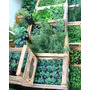 Plantas Aromáticas Y Horticolas 100% Orgánicas + Variedades