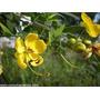 120 Semillas Arboles Florales Para Bonsai