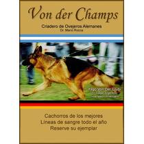 Cachorros Ovejeros Alemanes - Criadero Von Der Champs