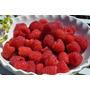Frambuesas Patagónicas Congeladas Iqf Kg. Frutos Rojos