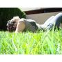 Raigras Anual - Cesped Ingles - Rye Grass - Ryegrass X 25kg