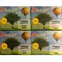 Alternativo Epson T133 Tx420 Tx430 Tx235 T133120 Juego X4