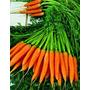 Mini Zanahorias Baby Verdaderas Semillas P/ Cultivo + Regalo