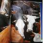 Riqueza Latente Inta 3ts Arte Criollo Produccion Rural Campo