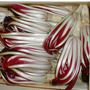 Semillas Achicoria Roja De Treviso. Dale Color A Tu Ensalada
