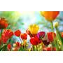 Cuadro De Flores En Tela Canvas Sobre Bastidor, 110x70