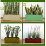 Maceta Jardinera 100x22cm + Plantas Para Tu Comercio, Balcón