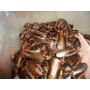 Cucarachas Blaptica Dubia - Alimento Vivo