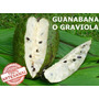 Guanabana O Graviola 15 Unidades Para Medio Mes 100% Pura