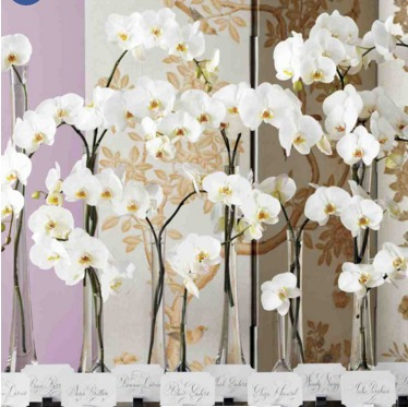 Varas Orquideas Phaleanopsis Naturales (ramos Y Tocados)