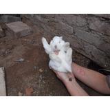 Venta De Conejos!!!!!!!!!!!!!!!!! 400 Pesos