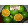 Limon-mandarina = Lima Runfur Plantines De 30 Cm Frutales