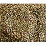 Semillas De Alfalfa Orgánica (para Brotes) 500grs