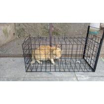 Trampa Para Atrapar Gatos Mascotas ,para Su Esterilización