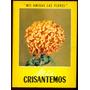 Mis Amigas Las Flores. Mis Crisantemos.