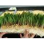 Kit 4000 Litros Cultivo Forraje Verde Hidroponico +cd Gratis