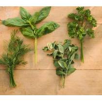Plantas Aromàticas Y Hortalizas En Maceta Nª12 Ideal Cocina
