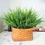 Rama Cabo Mata Pasto Grass Cesped Artificial Almagro