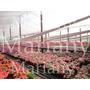 Plantines - Alegria Del Hogar C. X 10 U N°12- $130