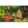 Fauna - Mariposas - Colombia - Hojita Block Mint (mnh)