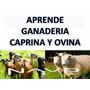 Kit Aprende Cria Cabras, Ovejas Caprino Y Ovino