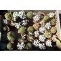 10 Cactus Variados En Macetas De Barro