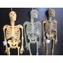 Esqueleto De Goma Muñeco Articulado Hobbies El Cuerpo Humano