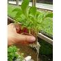 Nutriente Para Hidroponia X 1000 Litros + Insecticida Organ.