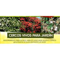 Cercos Vivos Todas Las Plantas Elegi Tu Opción Puerto Jardin