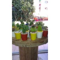 40 Cactus Y Suculentas En Maceta Nro 6 $ 800.00