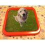 Bandeja Sanitaria 41x41 Cachorros Adultos - Super Precio !!!