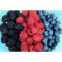 Mix De Frutos Rojos Del Bosque Congelados Iqf 1 Kg