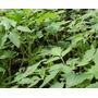 Plantines Huerta Tomate Berenjena Morron Acelga Lechug X 20