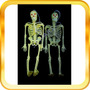 Esqueleto Humano De Goma-halloween-hobby-cuerpo Humano
