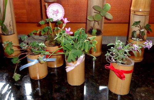 Original jardin vertical y souvenir ecologico ca a bamb for Jardin vertical mercadolibre