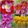 Semillas Combo De Flores Exoticas
