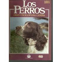 Enciclopedia Canina Perro Agua Irlandes Springer Ingles 101