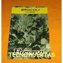 Sh Semillas De Brocoli.brócoli Brassica Oleracea V.italica