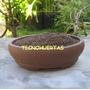 St Leca Mini Microarcilla Para Acuarios Orquideas Cactus