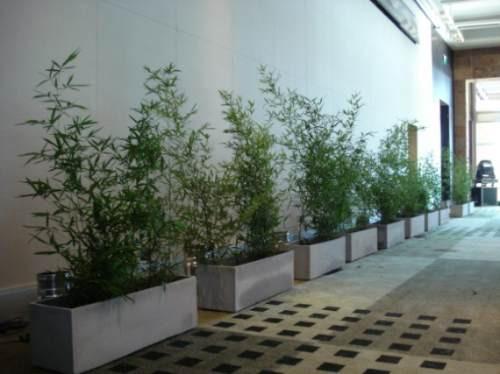Ca a bambu para cercos separaciones interior decorar - Bambu para decorar ...