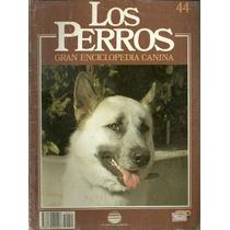 Enciclopedia Canina Perro Groenlandes Samoyedo Alakan