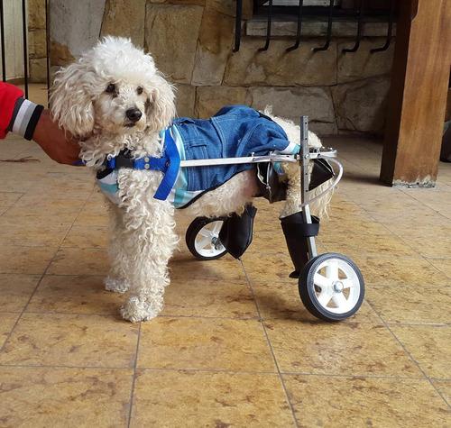 Silla de ruedas para perros y gatos tama o grande compra y venta - Tamano silla de ruedas ...