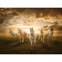Hermosos Caballos Blancos En Canvas De 80x60 Cm - Exelente